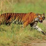Places to See Around Jim Corbett National Park
