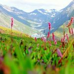 Valley of Flowers – Enchanting valley